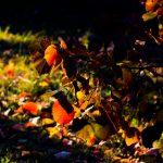 FOTO/ Toamna la Grădina Botanică, surprinsă în 14 imagini de poveste