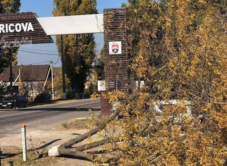 FOTO/ Mai mulți arbori au fost tăiați la Cricova. Primele constatări ale Inspectoratului  pentru Protecția Mediului