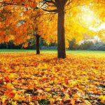 Septembrie 2021, una dintre cele mai călduroase luni septembrie înregistrate vreodată